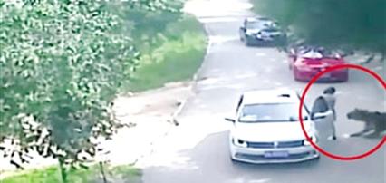 女游客虎园下车遇袭